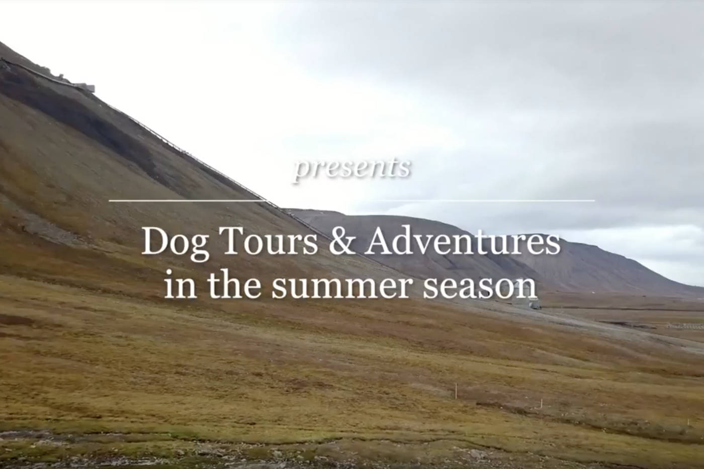 Dog Tour Summer Journey