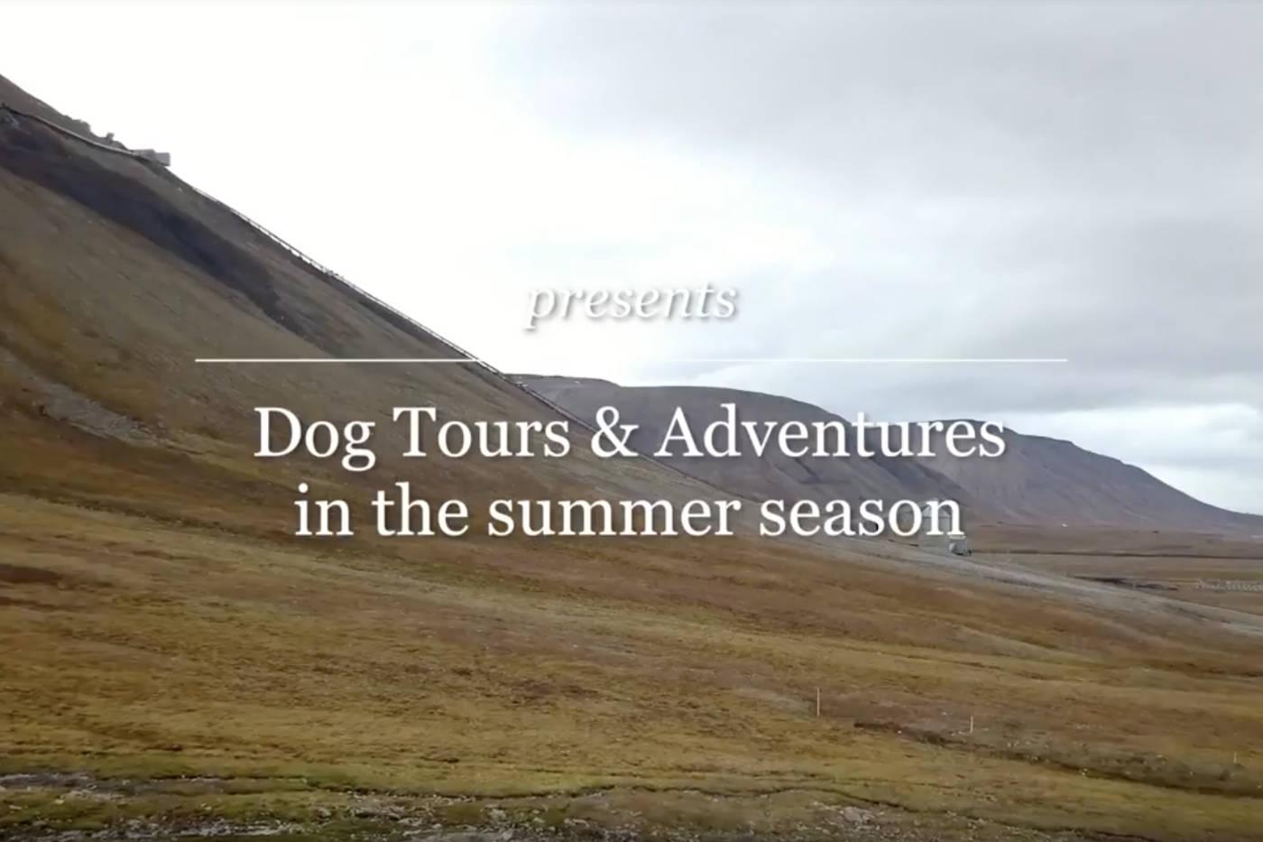 Dog Tour Summer Journey